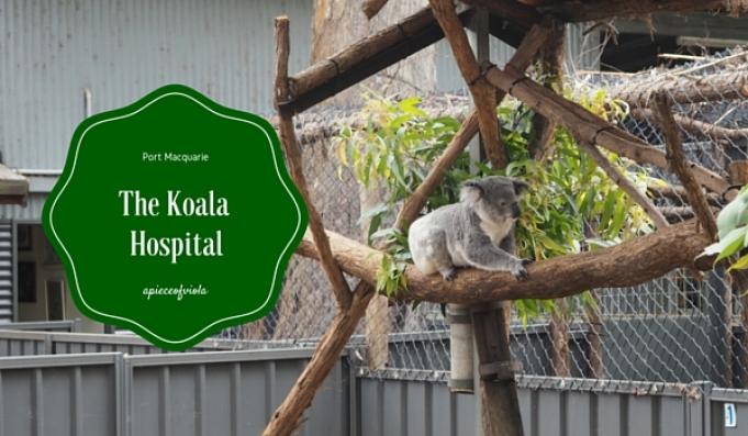 The Koala Hospital